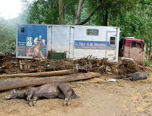 cavalos mortos haras turfe enchente