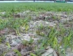 Estádio dos Pássaros, em Arapongas - detalhe (Foto: RPC TV)