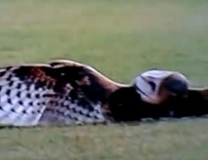 bolada coruja (Foto: Reprodução/Youtube)