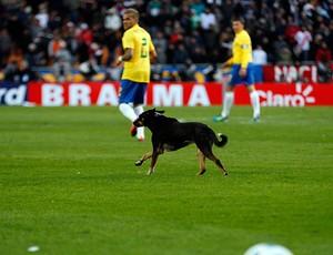 cachorro venezuela brasil copa américa (Foto: Agência Reuters)