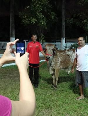 Sport - boi e fãs (Foto: Lula Moraes/GloboEsporte.com)