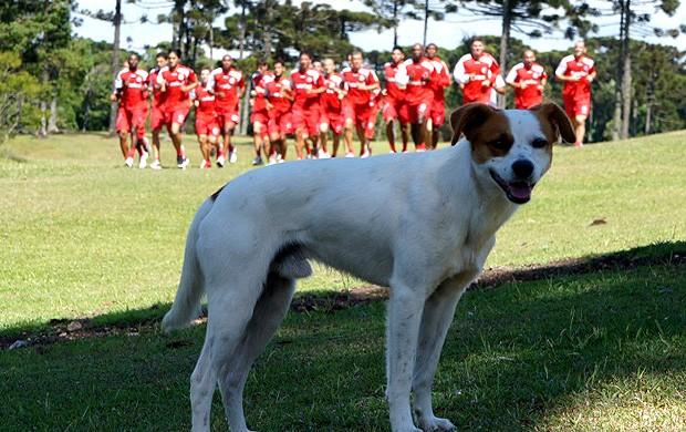 cachorro faisca treino internacional (Foto: Diego Guichard / Globoesporte.com)