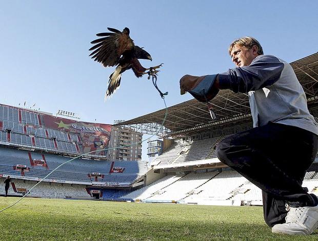 águia usada no estádio Mestalla para combater pombos