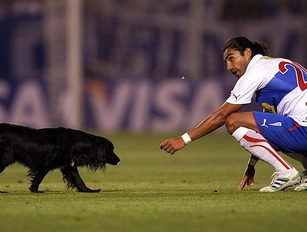 Cachorro em Universidad Católica x Velez Sarsfield (Foto: EFE)