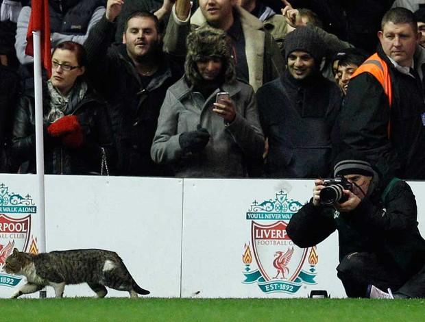 gato liverpool x tottenham (Foto: Reuters)