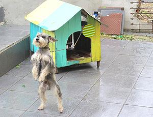 cachorro em curitiba, decoração para seleção brasileira