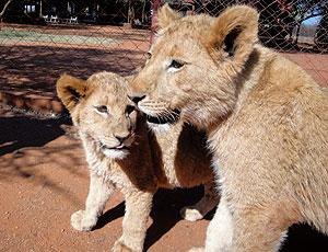 Parque dos Leões em Rustemburgo