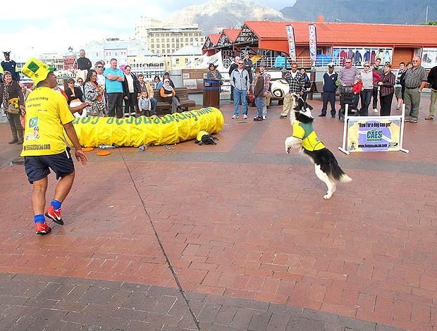 Cachorros fantasiados na Cidade do Cabo