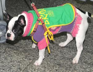 Cachorro no desembarque da seleção brasileira de futebol Copa do Mundo