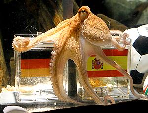 Polvo aposta vitória Espanha sobre Alemanha