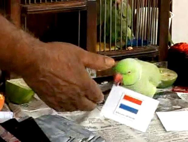 papagaio prevê o campeão mundial