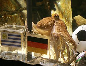 polvo profeta Alemanha terceiro lugar