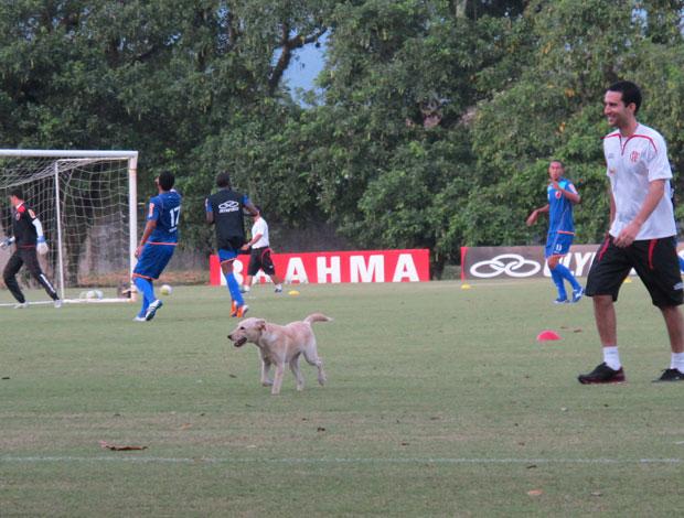 Cachorro no treino do Flamengo (Foto: Janir Junior / Globoesporte.com)