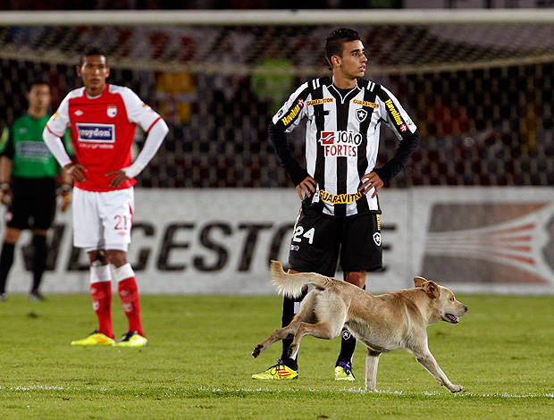 Santa F&#233; x  Botafogo cachorro (Foto: AP)