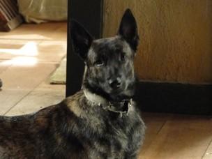 Cachorro Dragão vive na fazenda de Abner em Preciosa