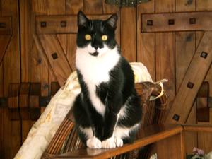 Zion, gato de Larissa Maciel
