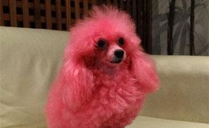 Madona participou como a cachorrinha de Minerva; relembre os bichos de 'Morde' (Morde & Assopra / TV Globo)