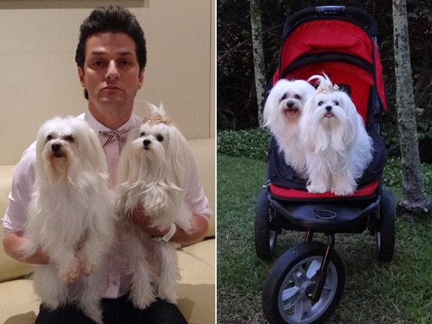 Cachorrinhas andam de carrinho assim como na novela (Foto: Fina Estampa/TV Globo)