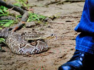 Cobra se aproxima dos pés de Fernando (Foto: Amor Eterno Amor/TV Globo)