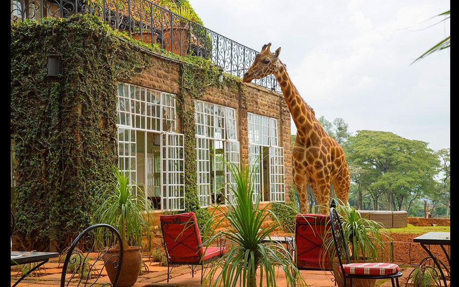 A bela mansão das girafas, a Giraffe Manor.