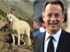 Em site, Tom Hanks lamenta morte de seu cão, Monty