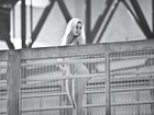 De cima da ponte, Aryane Steinkopf tira a roupa para a 'Playboy'