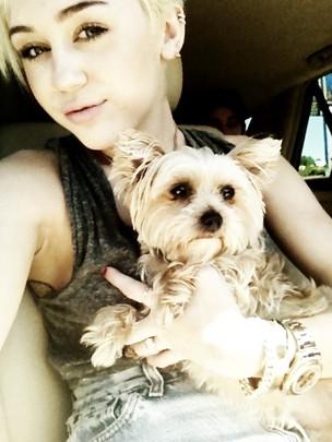 Miley Cyrus posta foto com cahorro no Twitter (Foto: Reprodução/Twitter)