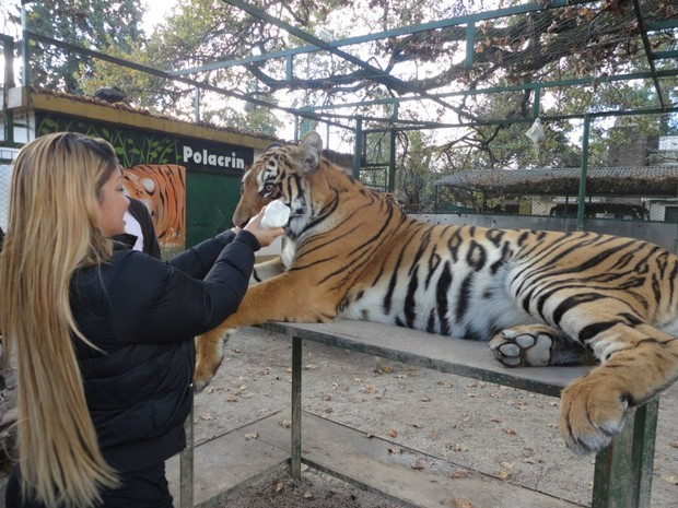 Ego mulher fil visita zool gico na argentina e d for Noticias famosos argentina