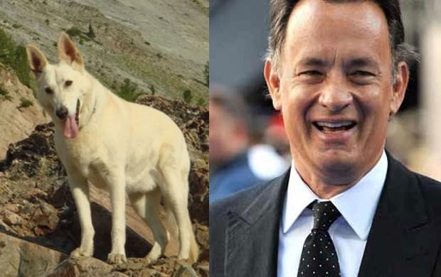 Tom Hanks e cachorro (Foto: Reprodução)