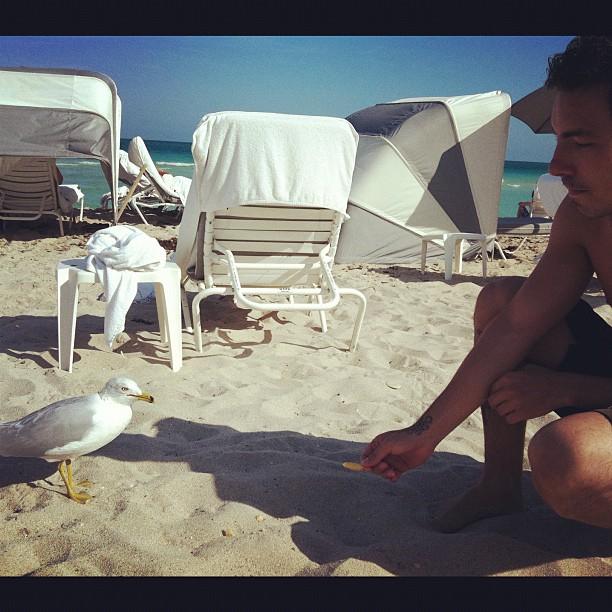 Di Ferrero, namorado de Mariana Rios, com ave em praia (Foto: Reprodução / Twitter)