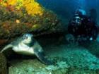 Arraial do Cabo é  o  'Caribe carioca' (Divulgação/ PL Diver)