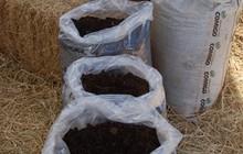 Produtos naturais substituem fertilizantes e agrotóxicos (Divulgação / Embrapa / Vinicius Benites)