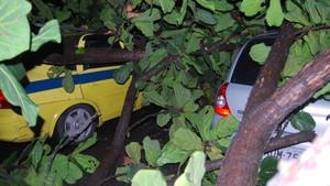[Colaborativo](26169)árvore cai na Rua Toneleiro, em Copacabana-2 (Foto: Eduarda Pina Cantaluppi Mello / VC no G1)