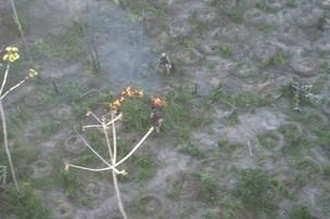 plantação de maconha na bahia (Foto: Divulgação)