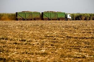 Colheita mecanizada de cana-de-açúcar em usina de Mato Grosso do Sul (Foto: Divulgação/ETH Bioenergia)