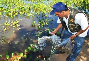 Peixes são soltos nos rios do Pantanal (Foto: Reprodução / Assessoria)