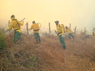 brigada de incêndio bahia (Foto: Divulgação)