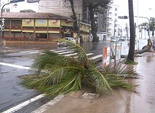Vento arranca coqueiro na Orla da Barra (Foto: Reprodução/TV Bahia)