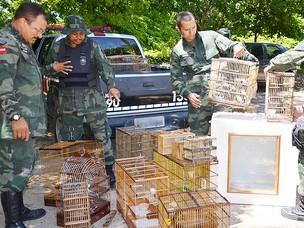 Polícia Ambiental apreende 45 aves silvestres em feira da Paraíba (Foto: Walter Paparazzo/G1 PB)