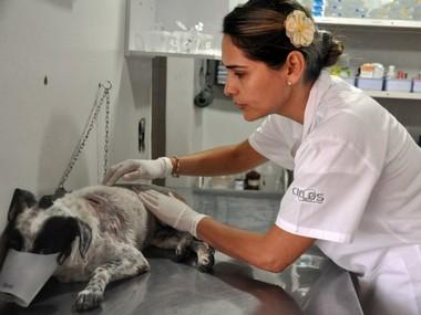 Vira lata Fofinho salva criança de 3 anos de pit bull em Campo Grande (Foto: Tatiane Queiroz/G1 MS)