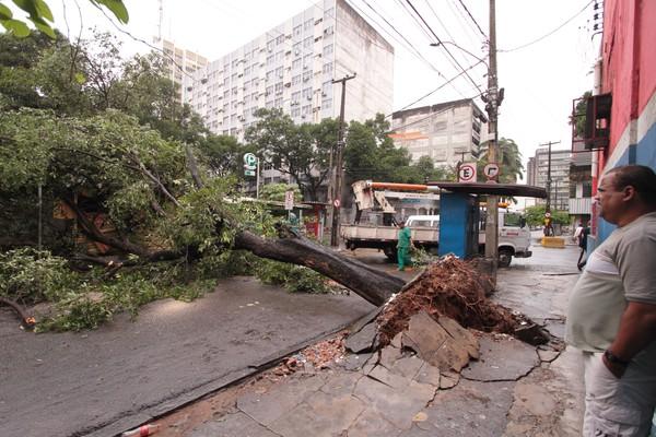 Árvore é arrancada pelas chuvas no Recife (Foto: Helia Scheppa/JC Imagem/AE)