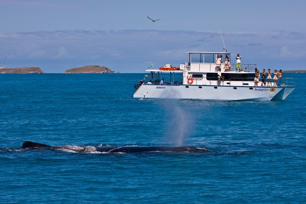 Turistas observam baleia jubarte na Bahia (Foto: Instituto Baleia Jubarte/ Enrico Marcovaldi)