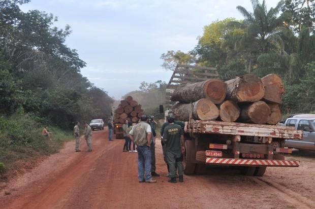 Caminhões com madeira ilegal apreendidos pelo Ibama no Mato Grosso (Foto: Divulgação)