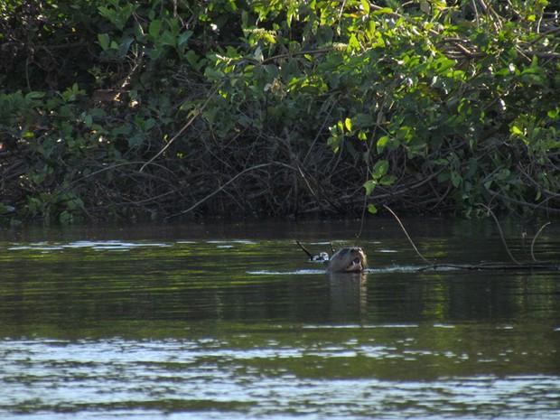 Fotos Pantanal (Foto: Claudia Gaigher/TV Morena)