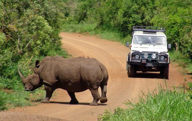 Rinoceronte (Foto: Dennis Barbosa/G1)