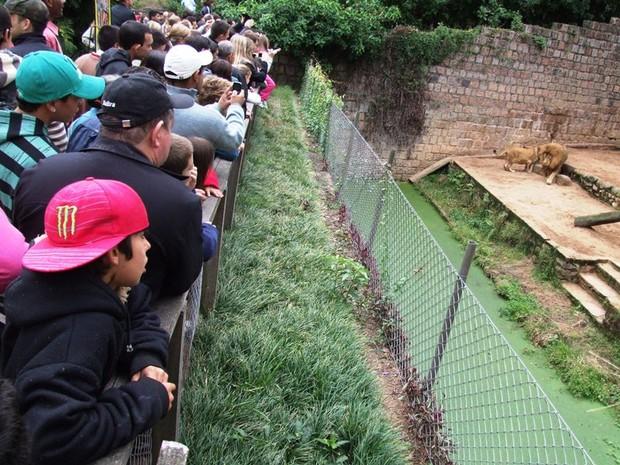 Zoológico Sapucaia do Sul (Foto: Daniel Hammes/Divulgação)