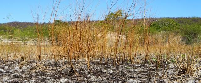 Leito seco do Riacho Grande, no povoado de Mocambo do Branco, em Morpará (BA) (Foto: Glauco Araújo/G1)