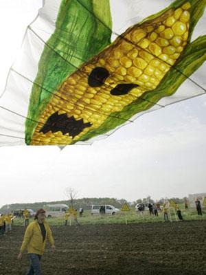 Ativistas do Greenpeace protestam na Alemanha, em 2005, contra a plantação de milho geneticamente modificado