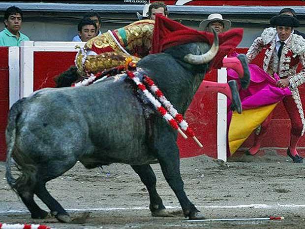 Touro atinge toureiro espanhol José Tomás, durante exibição no México.