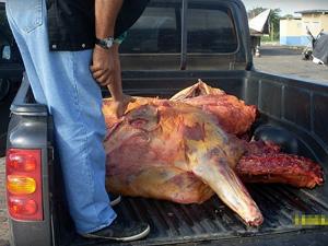 Cerca de 180 quilos de carne bovina transportada irregularmente foram apreendidos, em Malhada dos Bois